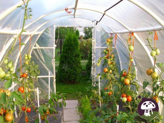 Tunel foliowy na warzywa
