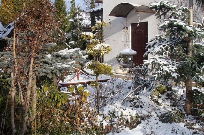 Widok zimowego ogrodu.