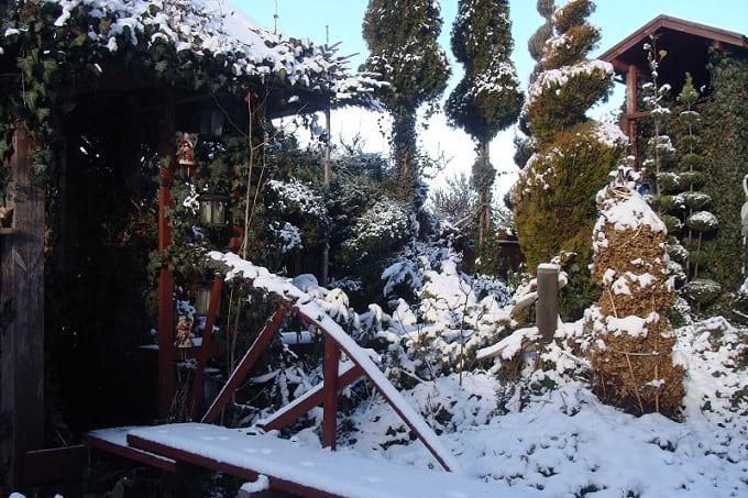 Śnieg okrywa rośliny grubą pierzynką.
