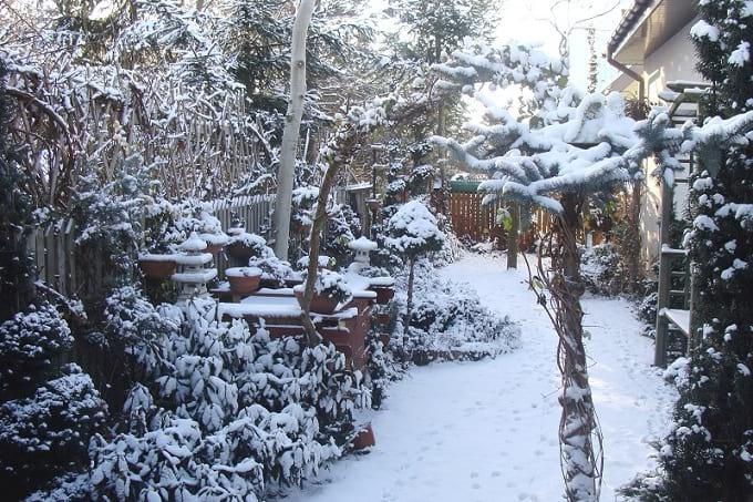 Przysypany śniegiem ogród.