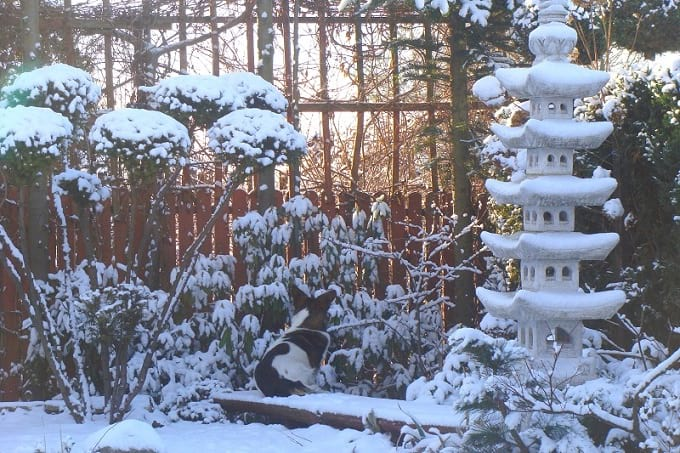 Przysypane śniegiem rośliny w promieniach zimowego słońca wyglądają bardzo malowniczo.