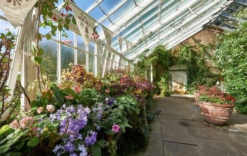 ogród zimowy pełen roślin
