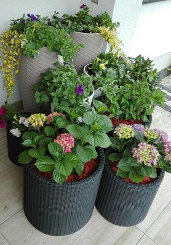 Rośliny Do Doniczki Na Balkon I Do Mieszkania Porady