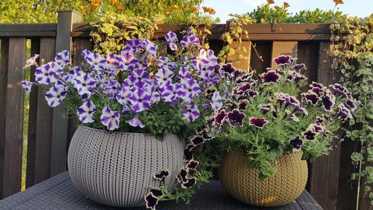 Jak Dobrać Kolorowe Doniczki Na Balkon Porady Meblobraniepl