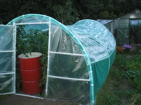 Złe podwiązanie pomidorów w tunelu - zapadnięty foliak