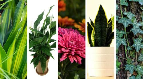 Ochrona przed smogiem – rośliny oczyszczające powietrze w domu