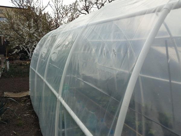 Gotowa folia ogrodnicza na szklarnie